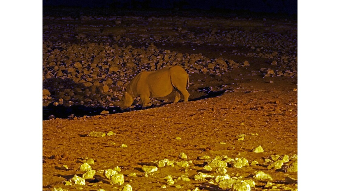 Namibie Etosha Point d'eau d'Okaukuejo la nuit 4