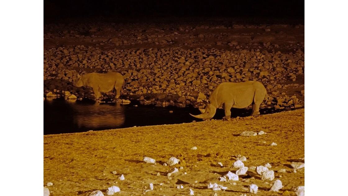 Namibie Etosha Point d'eau d'Okaukuejo la nuit 6