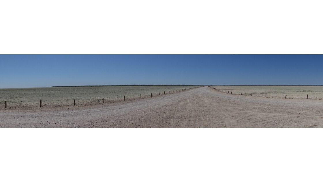 Namibie Etosha Sur la piste d'Okaukuejo