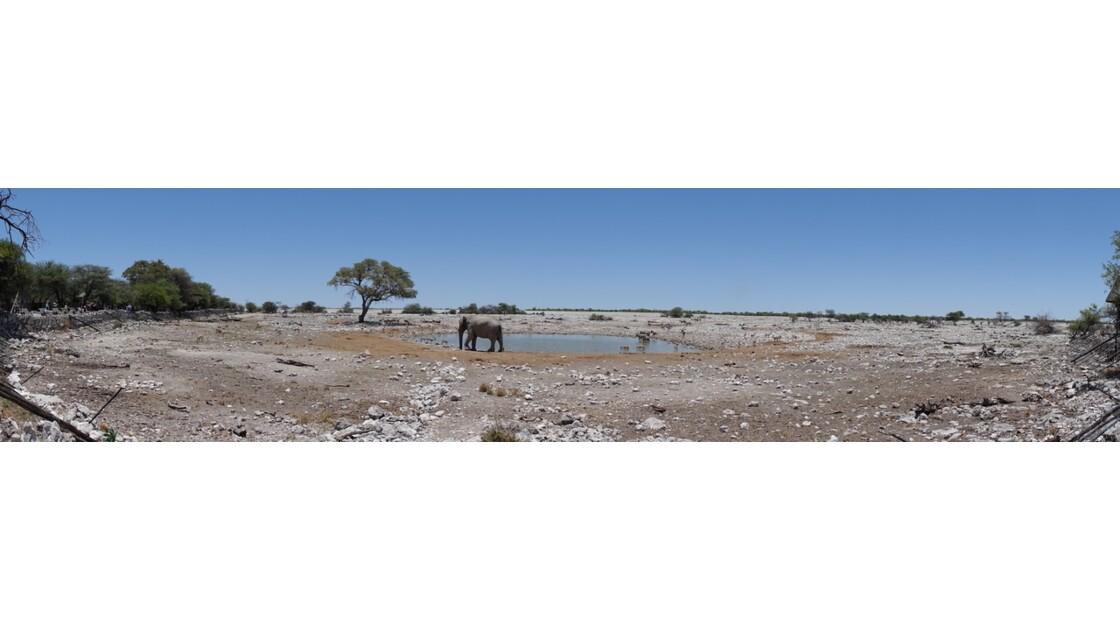 Namibie Etosha Point d'eau d'Okaukuejo 5