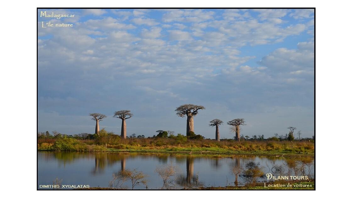 L'Allée des baobabs - Morondava  Avenue of baobabs - Morondava