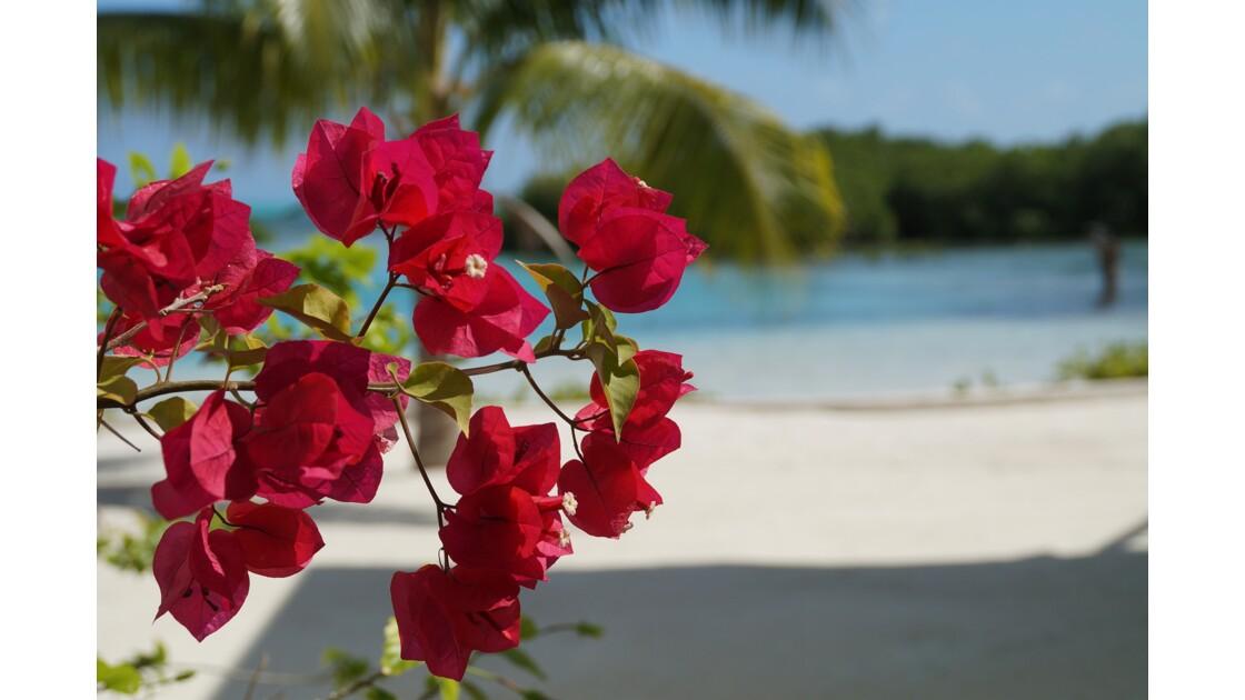 Beautés marines du Belize