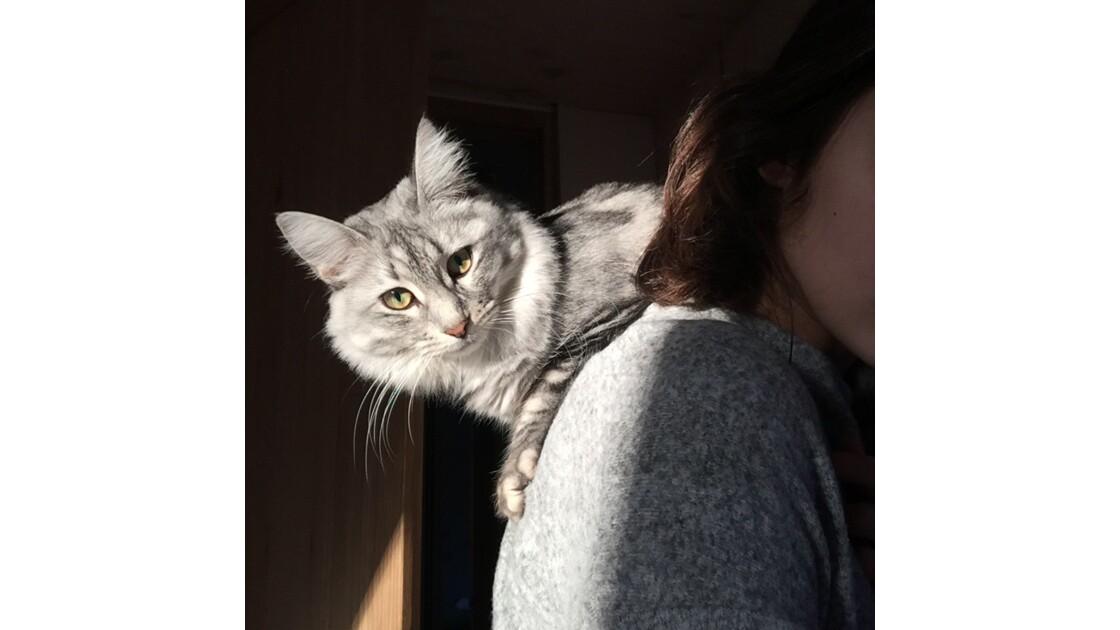 Toujours sur nos épaules la Lily