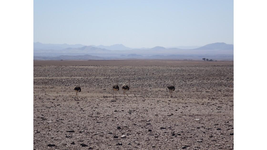Namibie Entre Bloedkoppe et Sesriem 2