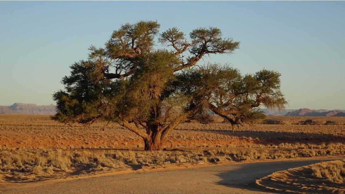 Namibie Sossusvlei au pied de la Dune Elim