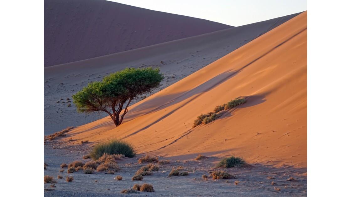 Namibie Dune 45 Sossusvlei 3