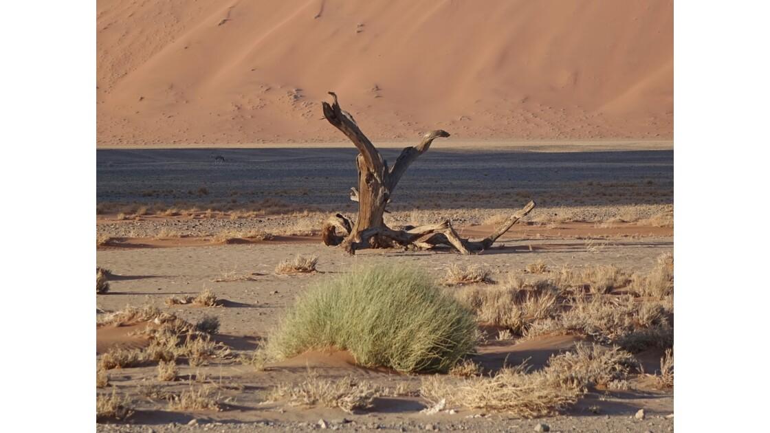 Namibie Autour de la Dune 45 Sossusvlei