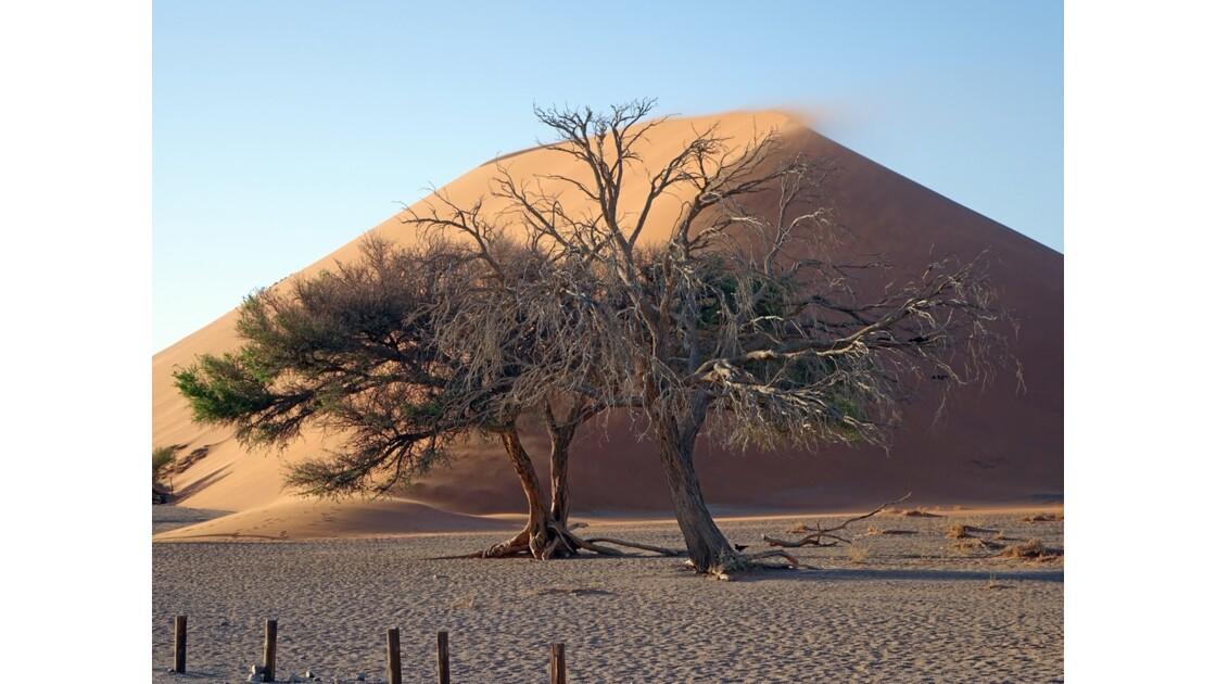 Namibie Dune 45 Sossusvlei 4