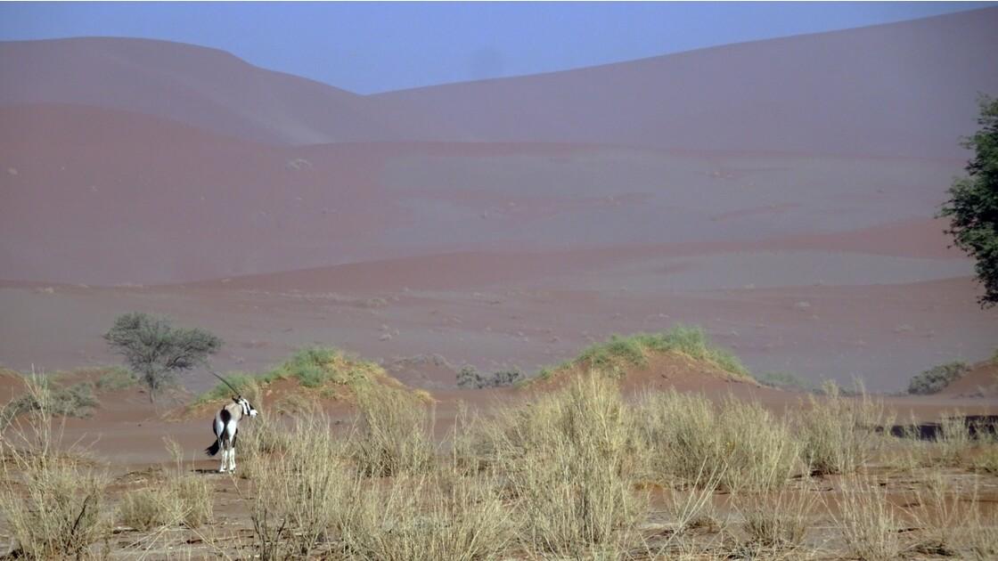 Namibie Sossusvlei oryx 2