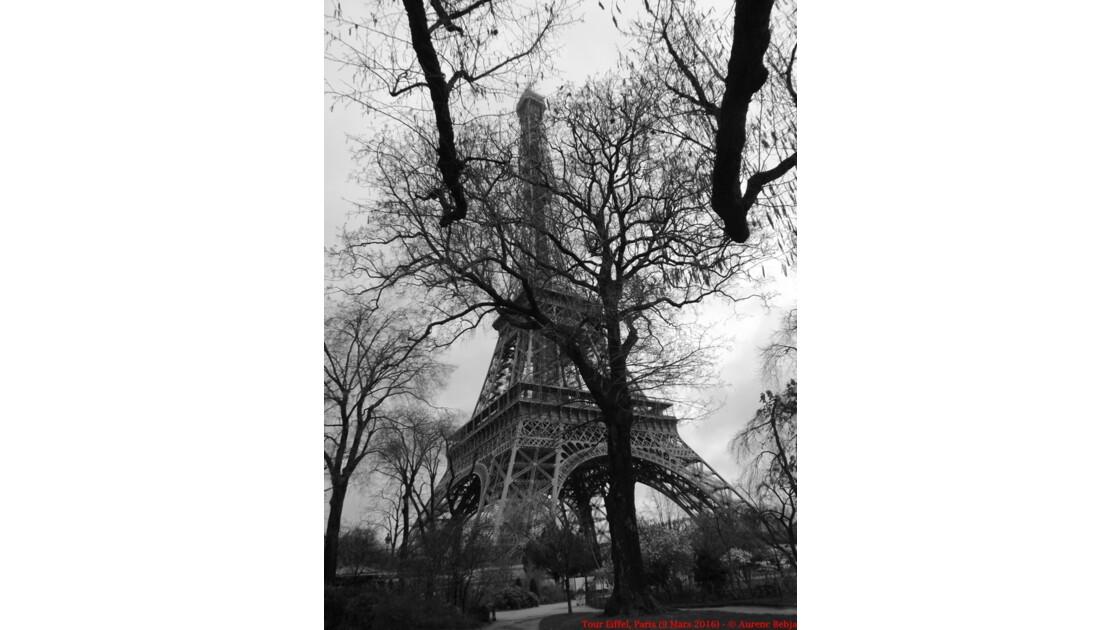 Eiffel Tower (Black & White)