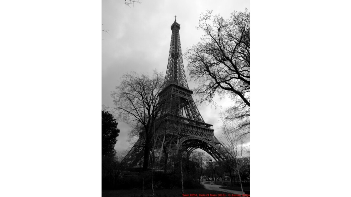 Eiffel Tower (Black & White)