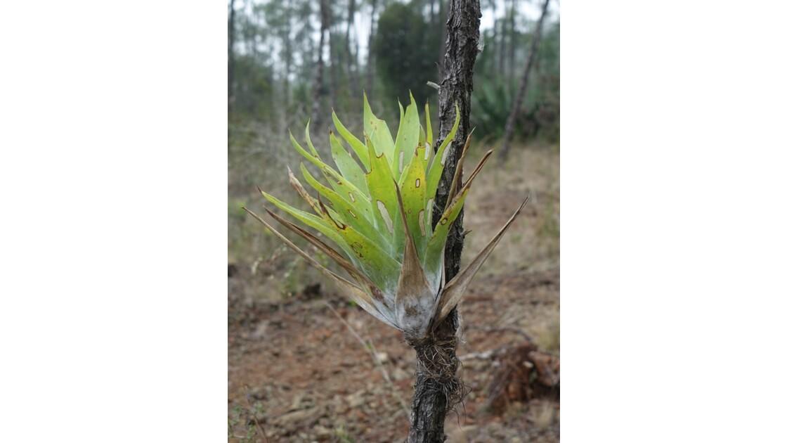 Cuba Parc de La Mensura Epiphytes 2