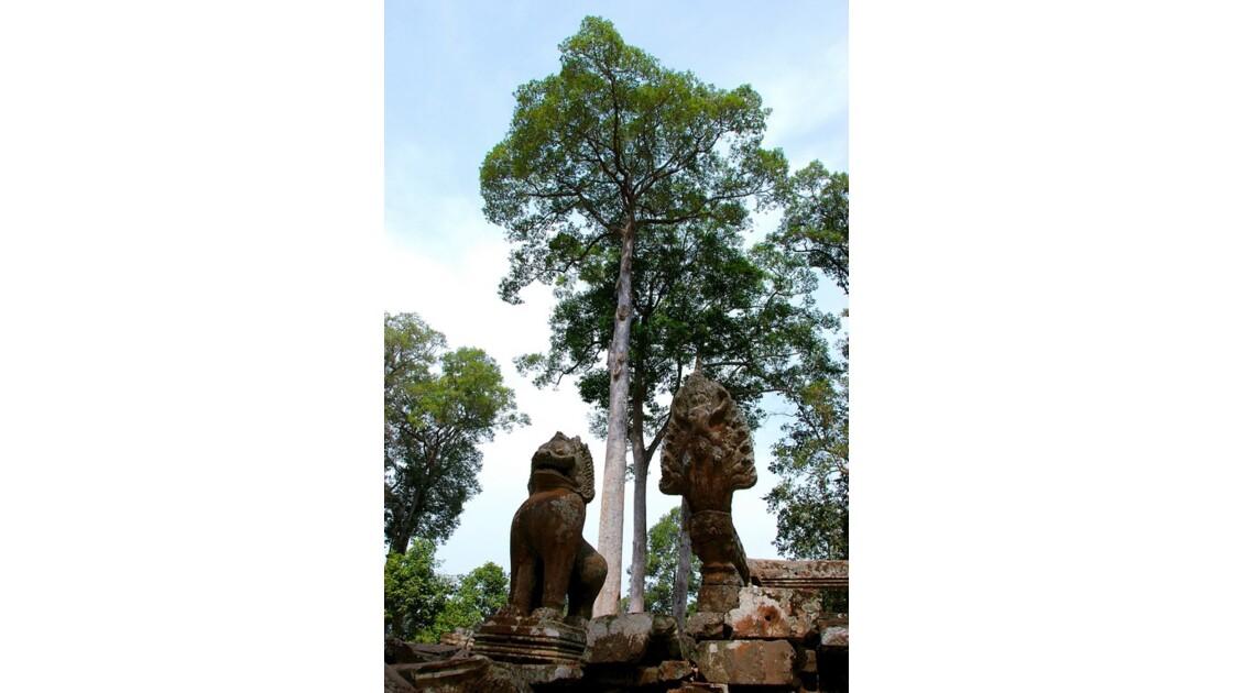 SIte d'Angkor