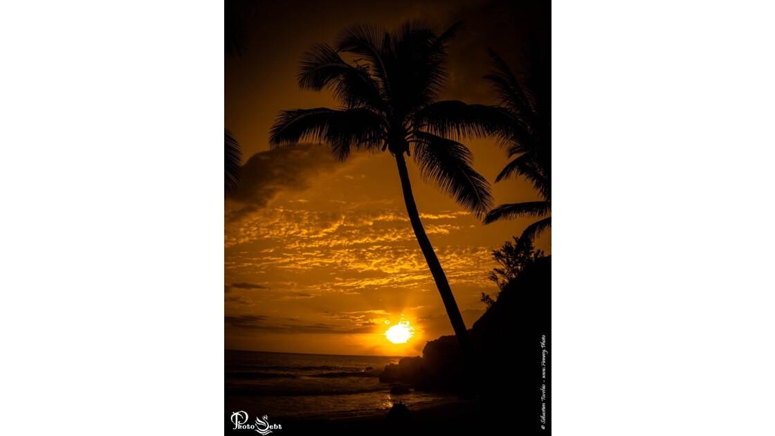 Coucher de Soleil et Palmier sur l'ile de La Réunion