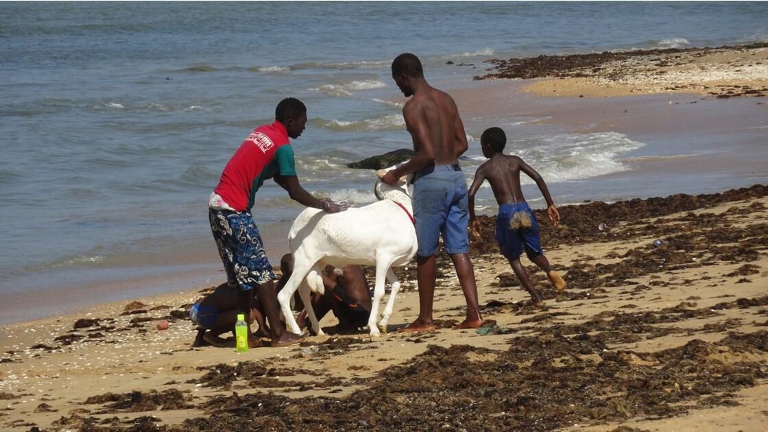 Sénégal entre Saly et Mbour Toilette 3