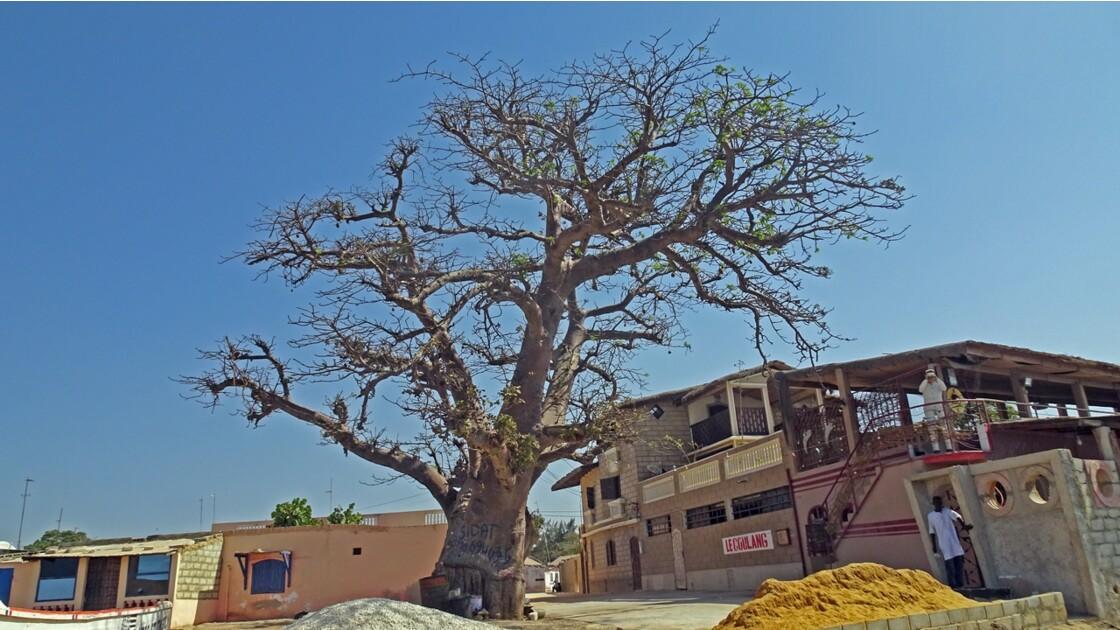 Sénégal Saly le baobab jumeau 1