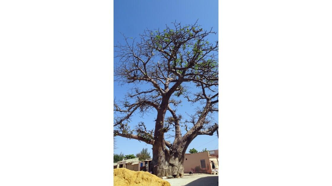 Sénégal Saly le baobab jumeau 2