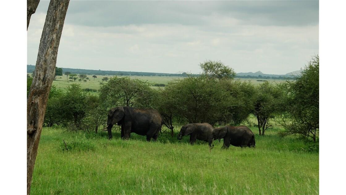 Histoire d'éléphants