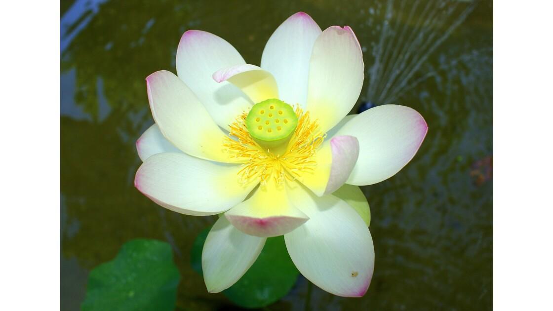 Macro Fleurs Exotiques