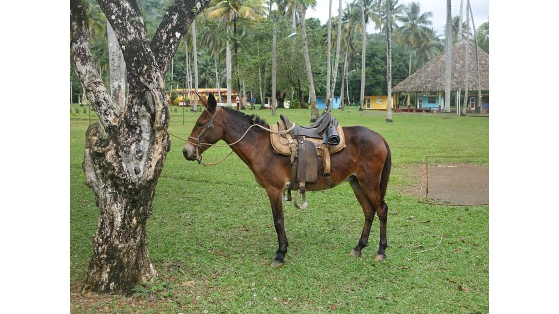 Cuba Sendero El Yunque 5