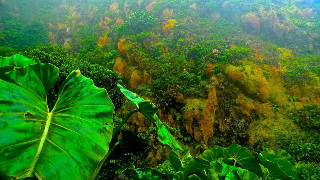 Sur le chemin de la soufrière.... Une végétation particulière !