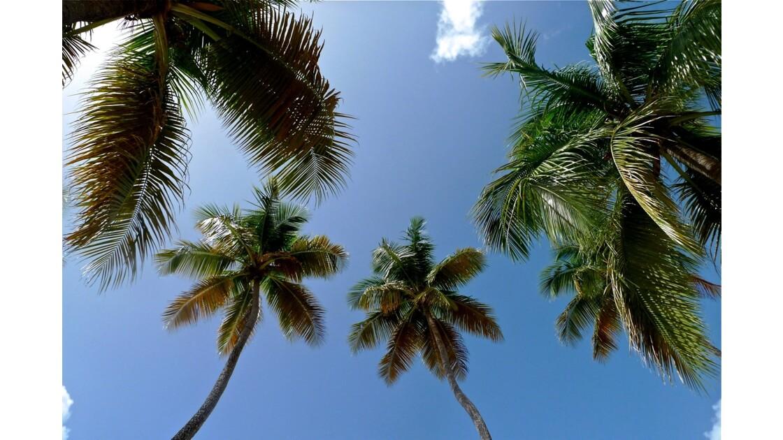 Sable blanc, eaux turquoises et cocotiers ...