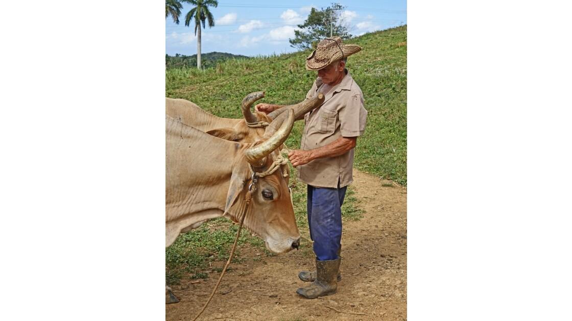 Cuba Eleveur de la Vallée de la Sagua 1