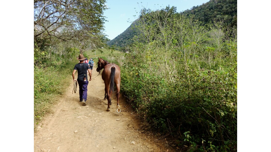 Cuba Vallée de la Sagua Cow Boy 2
