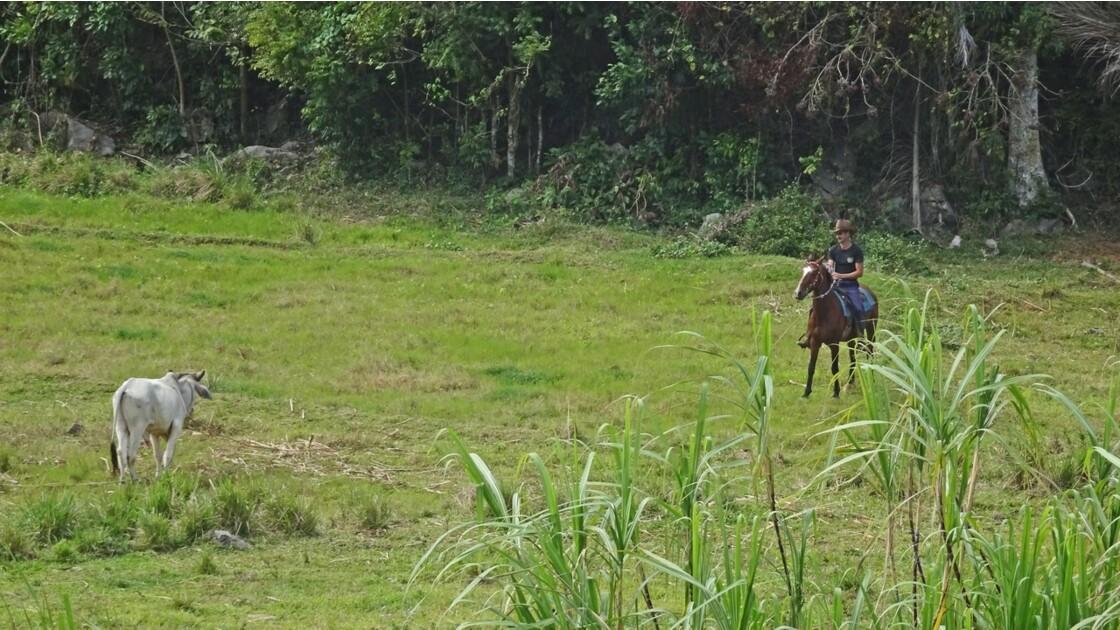 Cuba Vallée de la Sagua Cow Boy 4