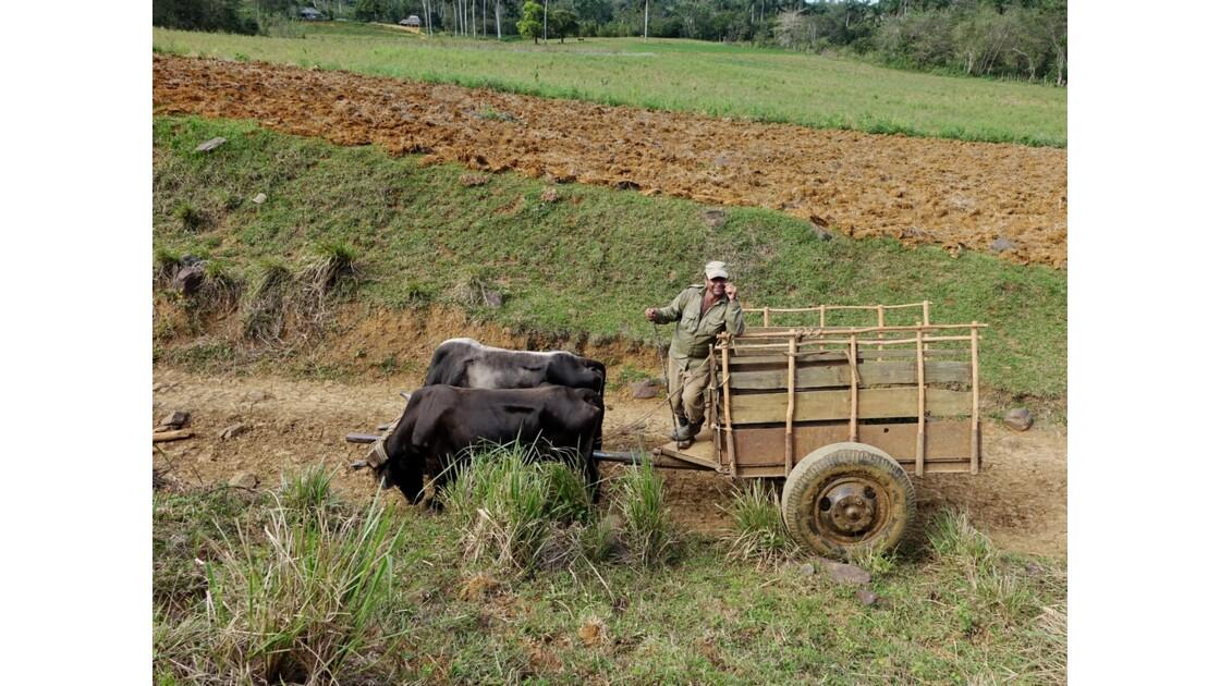 Cuba Vallée de la Sagua le chariot cubain 2