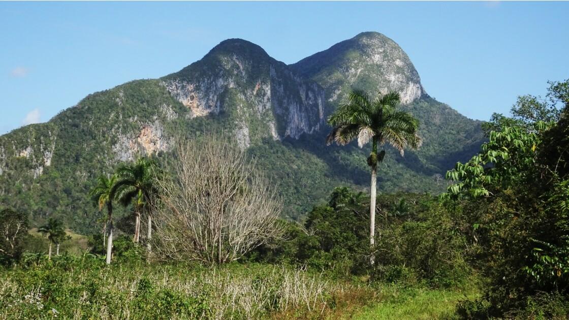 Cuba Vallée de la Sagua une mongote