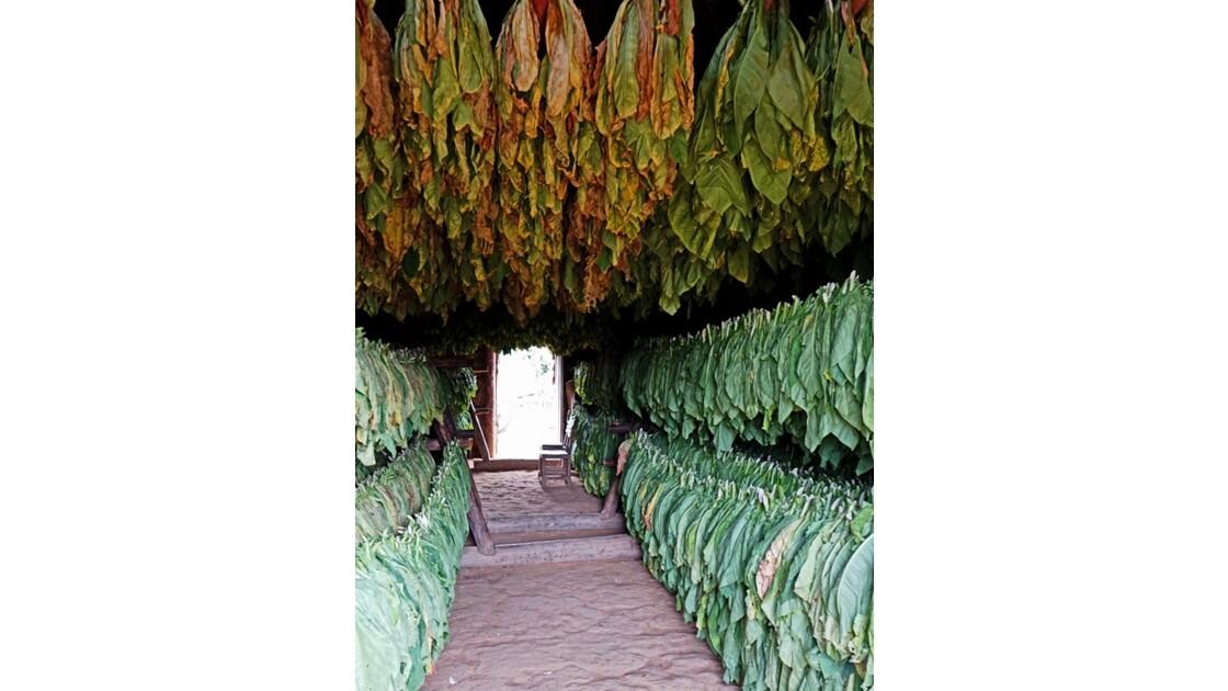 Cuba Vinales Séchoir à tabac 4