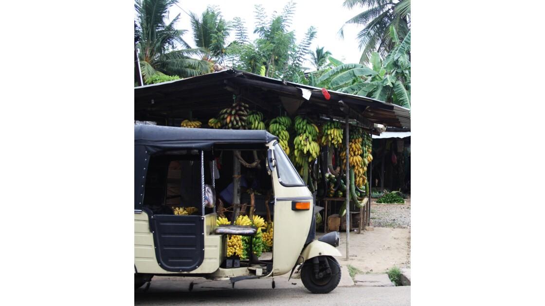 Sri Lanka tuktuk coconuts