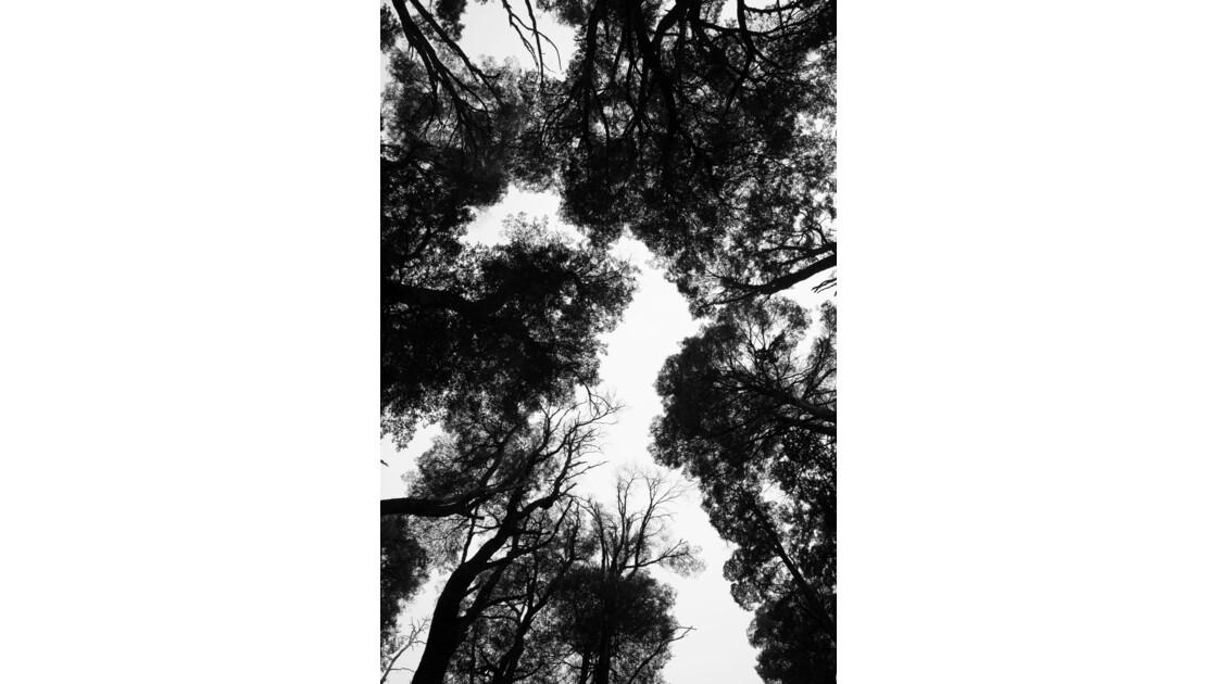 Sous une forêt de Patagonie