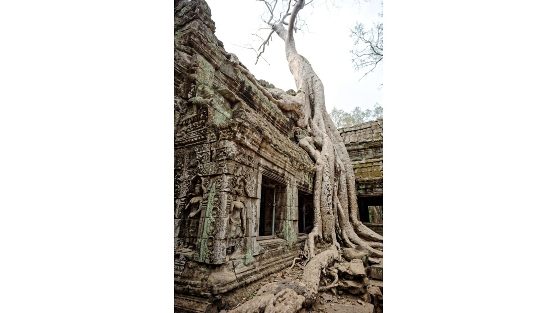Temple d'Angkor - Ta Prohm