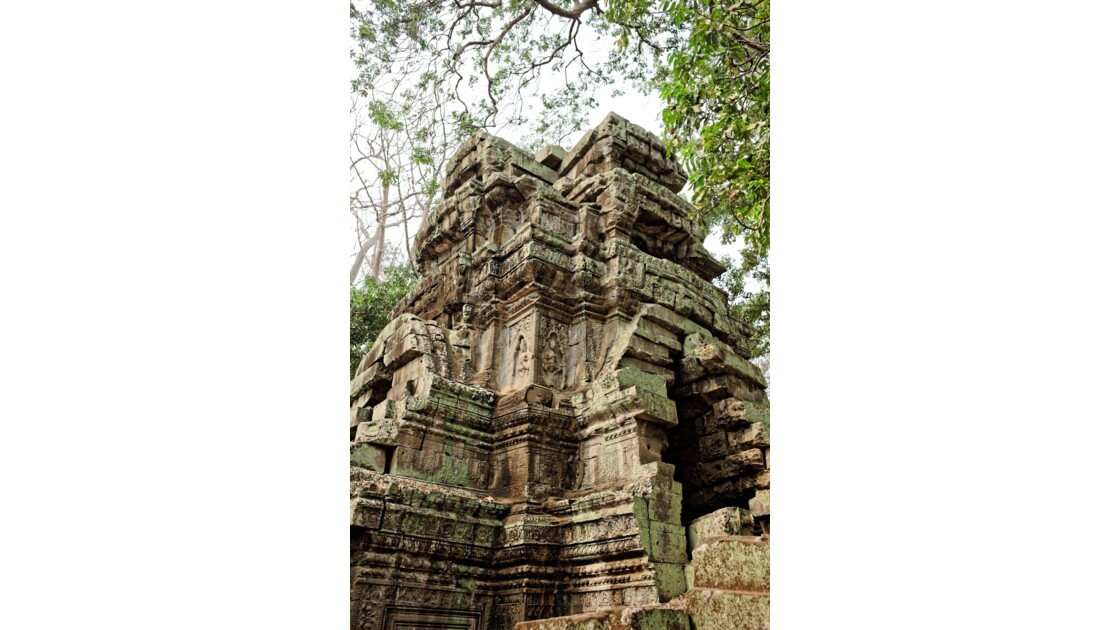 Temple d'Angkor - Ta Prohm
