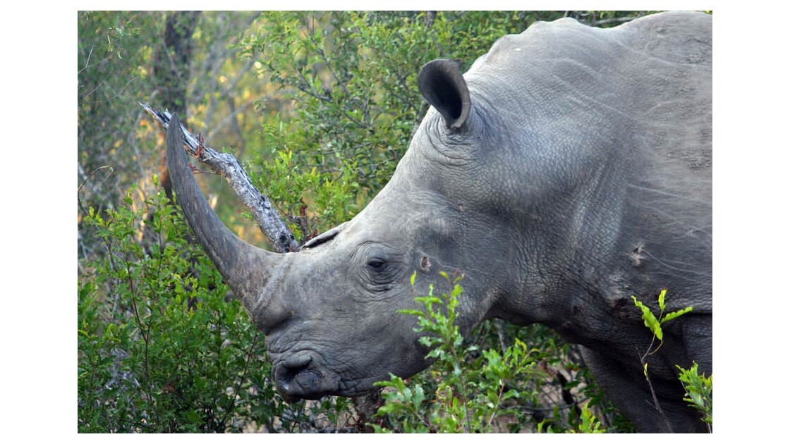 Visages, faune et paysages du Swaziland