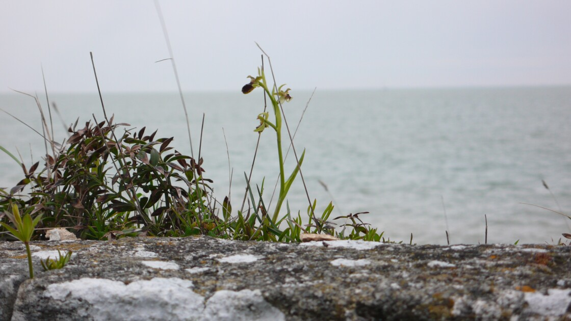 Orchid over the ocean
