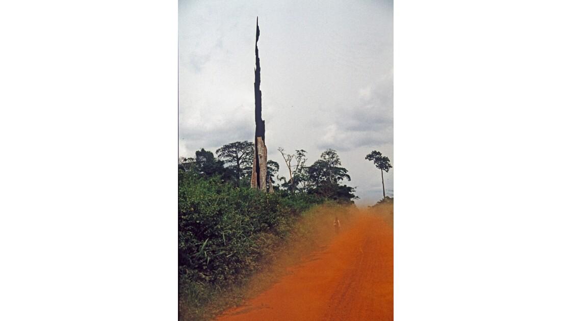 Congo 70 Sangha Sur la piste de Mokeko 2