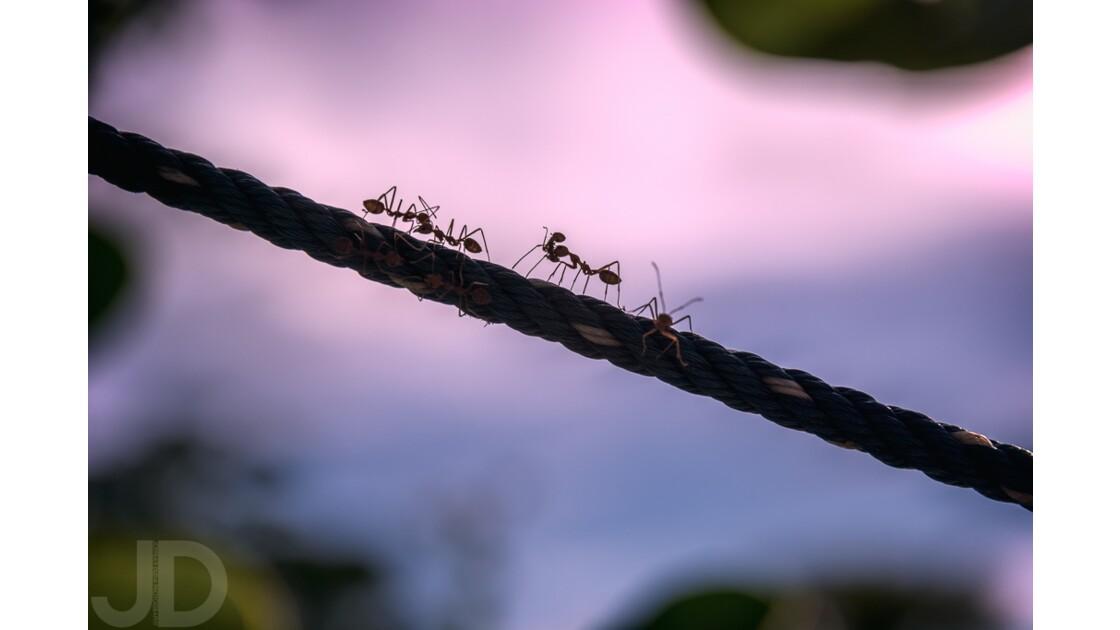 Infatigables travailleuses au coucher du soleil
