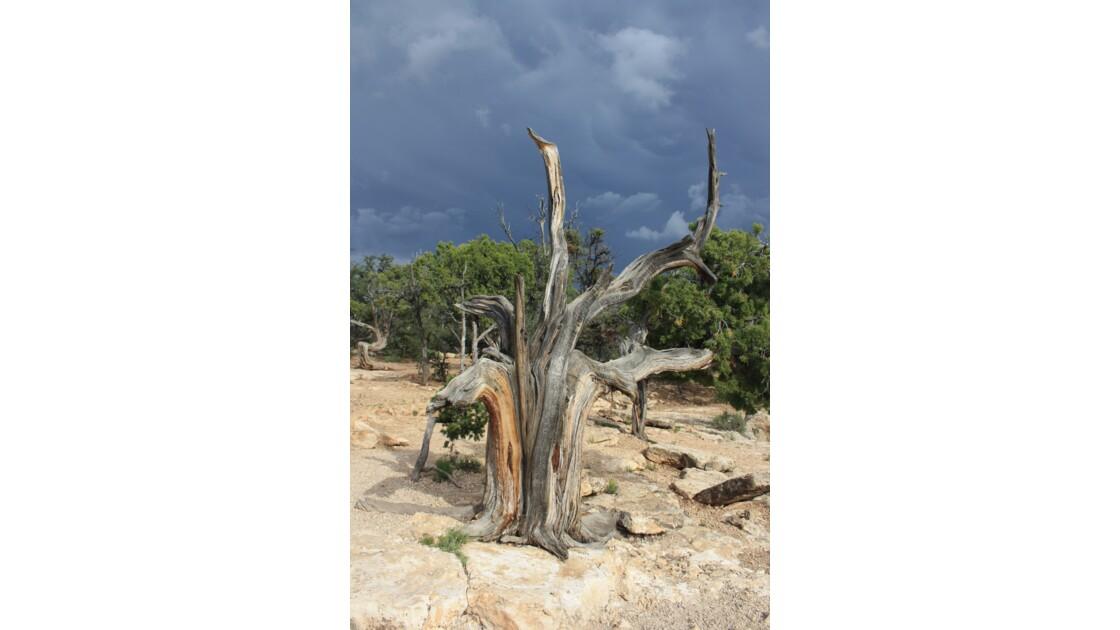 Nature morte au Grand Canyon