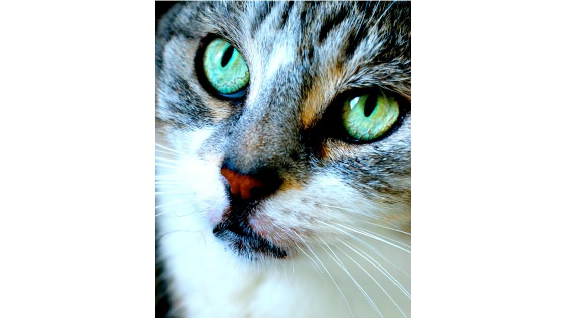 Asia, la chatte aux yeux verts