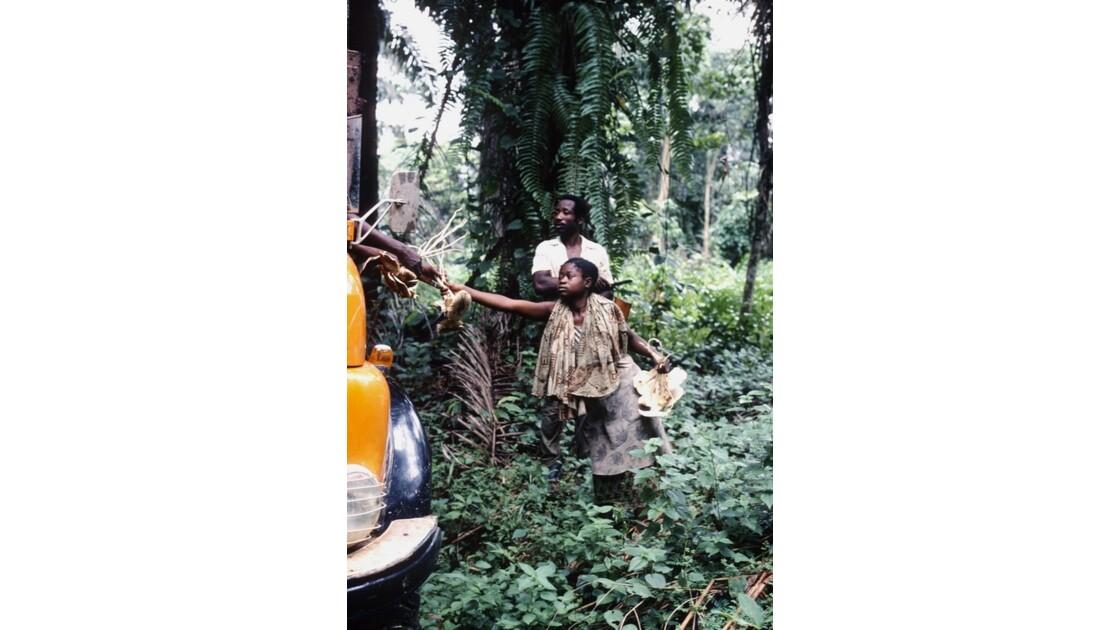 Congo 70 Zanaga-Bambama Achat de champignons