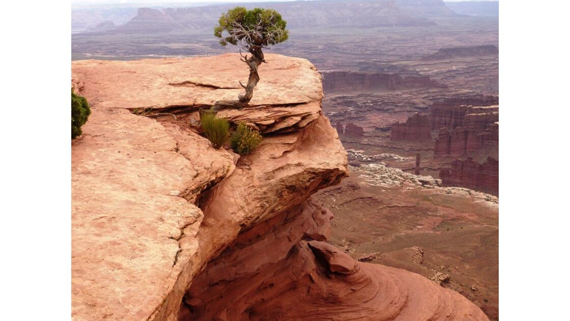 Canyonlands Californie