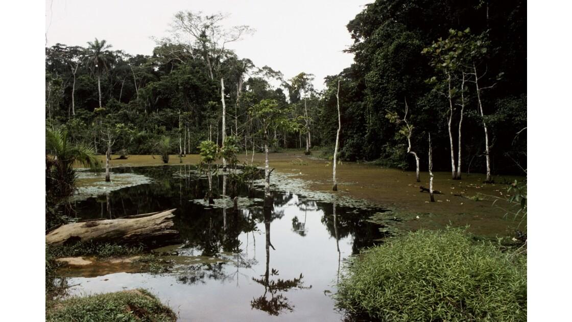 Congo 70  Autour de Sibiti  Marigot 5