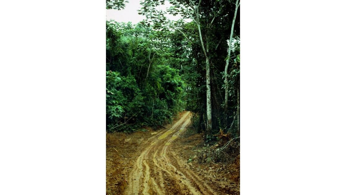 Congo 70 Forêt du Chaillu bourbier 4