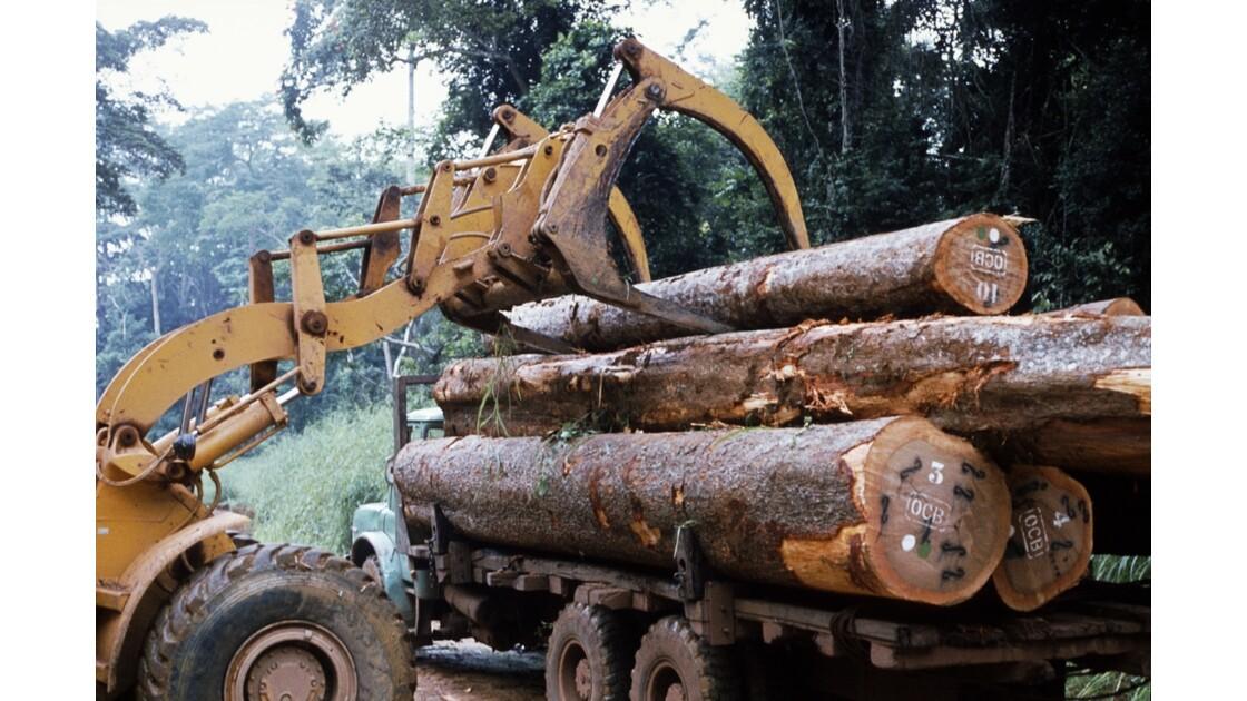 Congo 70 Forêt du Chaillu chargement des grumes 4