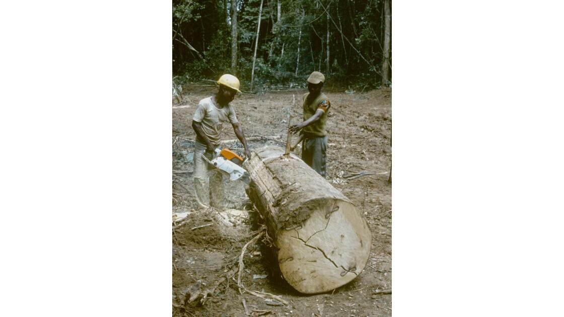 Congo 70 Forêt du Chaillu tronçonnage  1