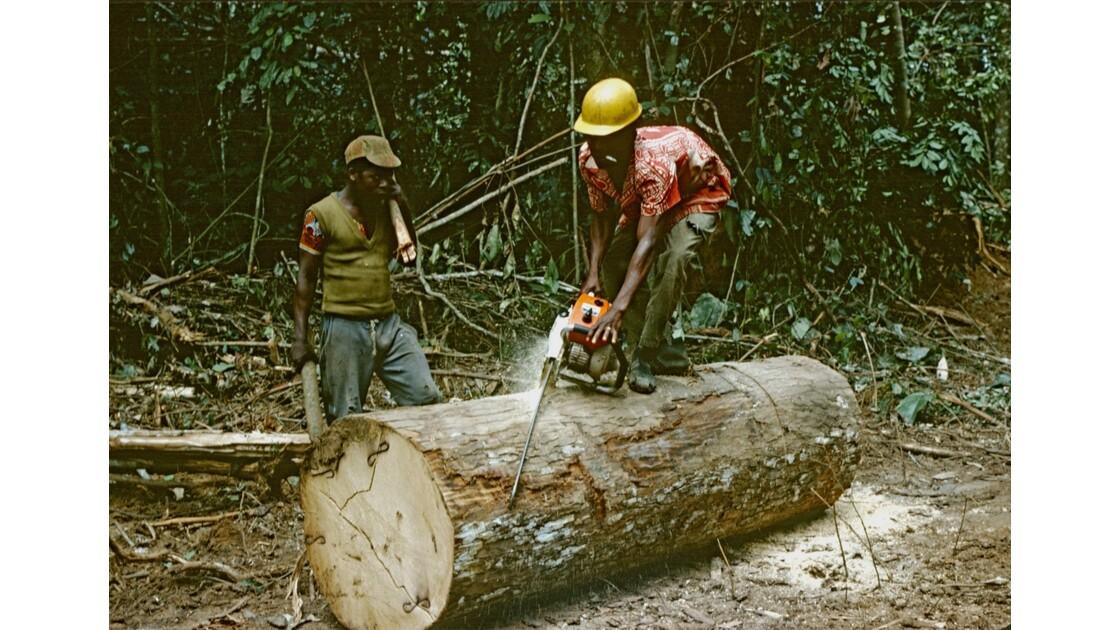 Congo 70 Forêt du Chaillu débardage 2