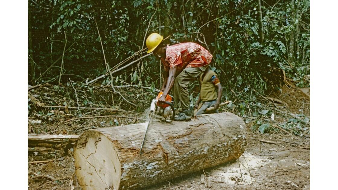 Congo 70 Forêt du Chaillu débardage 4